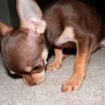 Your Pet S Best Friend Carpet Care San Fernando Valley Pet Stain And Carpet Care Expert